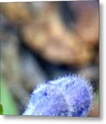 Blue Lupine Flower - 3 Of 5 Shots Metal Print