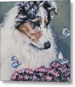 Blue Merle Collie Pup Metal Print