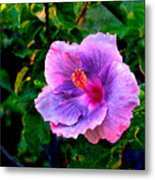 Blue Moon Hibiscus Metal Print