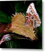 Blue Morph Butterfly Metal Print