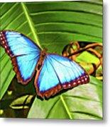 Blue Morpho Butterfly 2 - Paint Metal Print