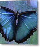 Blue Morpho Butterfly Portrait Metal Print