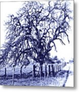 Blue Oak Metal Print