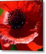Blue On Red Poppy Metal Print