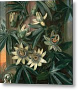 Blue Passion Flower For The  Temple Of Flora By Robert Thornton Metal Print