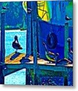 Blue Pelicans Metal Print