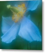 Blue Poppy 5 Metal Print