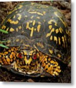 Blue Ridge Box Turtle Metal Print