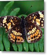 Blue Ridge Butterfly Metal Print