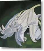 Blue Ridge Lilly Metal Print