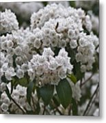 Blue Ridge Mountain Laurel Metal Print