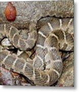 Montreat Water Snake Metal Print
