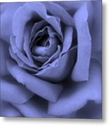 Blue Rose Abstract Metal Print