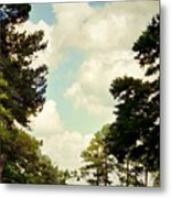 Blue Skies And Pines Metal Print