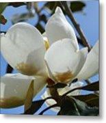 Blue Skies Magnolia Metal Print