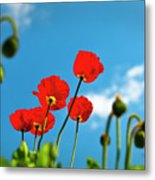 Blue Sky And Poppies Metal Print