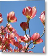 Blue Sky Art Prints Pink Dogwood Flowers 16 Dogwood Tree Art Prints Baslee Troutman Metal Print