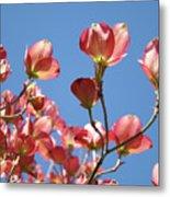 Blue Sky Art Prints Pink Dogwood Flowers 16 Dogwood Tree Art Prints Baslee Troutman Metal Print