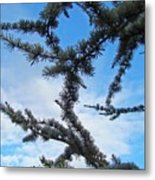 Blue Sky Art Prints White Clouds Conifer Pine Branches Baslee Troutman Metal Print