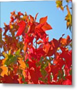 Blue Sky Autumn Art Prints Colorful Fall Tree Leaves Baslee Metal Print