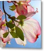 Blue Sky Floral Art Pink Dogwood Tree Flowers Metal Print