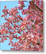 Blue Sky Floral Art Print Pink Dogwood Tree Flowers Baslee Troutman Metal Print