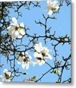 Blue Sky Floral Art White Magnolia Tree Metal Print