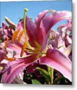 Blue Sky Floral Landscape Pink Lilies Art Prints Canvas Baslee Troutman Metal Print