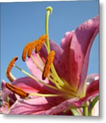 Blue Sky Florals Art Pink Calla Lily Blooming Baslee Troutman Metal Print