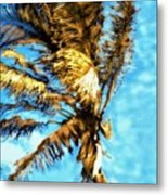 Blue Sky Palm Metal Print