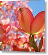 Blue Sky Pink Azalea Dogwood Flowers 4 Landscape Nature Artwork Metal Print