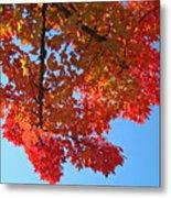 Blue Sky Red Autumn Leaves Sunlit Orange Baslee Troutman  Metal Print