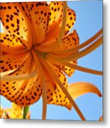 Blue Sky Sunshine Tiger Lily Flowers Giclee Prints Baslee Troutman Metal Print