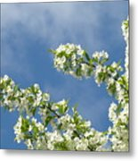 Blue Sky White Clouds Landscape Art White Tree Blossoms Spring Metal Print