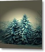 Blue Spruce-maine Evergreens Metal Print