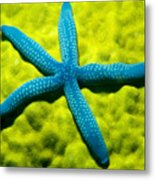 Blue Starfish On Poritirs Metal Print