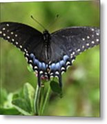 Blue Tailed Black Butterfly Metal Print