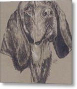 Blue Tick Coonhound Metal Print