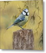 Blue Tit Bird II Metal Print