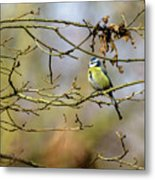Blue Tit Woods Metal Print
