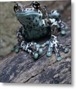 Blue Tree Frog Metal Print