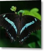 Blue Triangle Butterfly Metal Print