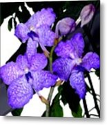 Blue Violet Orchids Metal Print