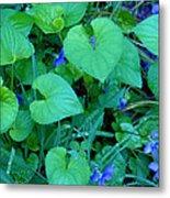 Blue Violets Metal Print