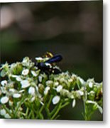 Blue Wasp 1 Metal Print
