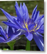 Blue Water Lily Metal Print