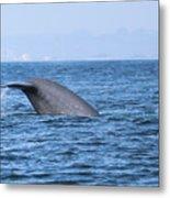 Blue Whale Tail Flop Metal Print