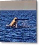 Blue Whales Tail Metal Print