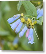 Blue Wild Flower Metal Print