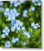 Blue Wildflowers Forget Me Nots Metal Print